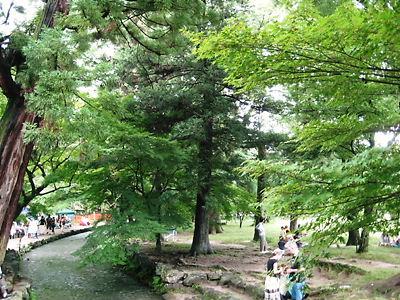 東林院 沙羅双樹2