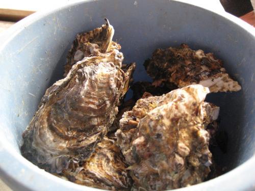 牡蠣の寺岩