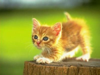 catname