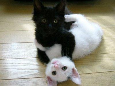おもしろネコ画像6