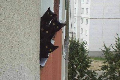 おもしろネコ画像5