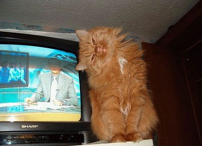 おもしろネコ画像4
