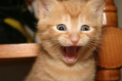 おもしろネコ画像1