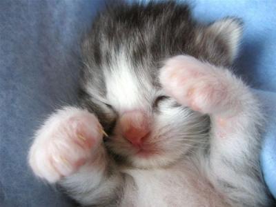 catsleep3