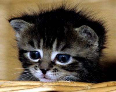 sadcat3