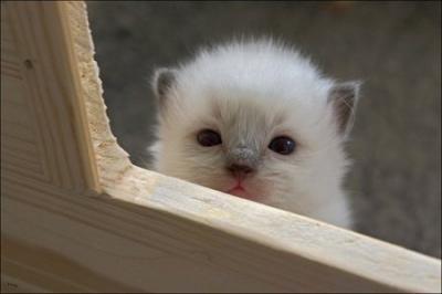 sadcat4