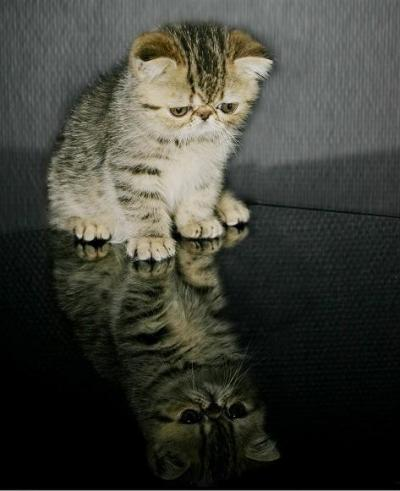sadcat10