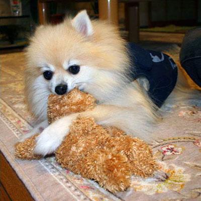 おもちゃと格闘中 エルモ