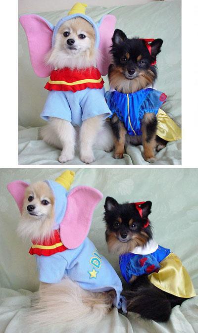 ダンボ (エルモ) & 白雪姫 (クレア)