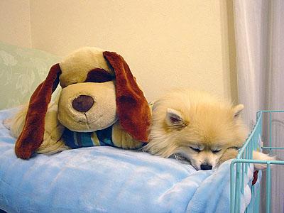 寝袋一番乗りの エルモ
