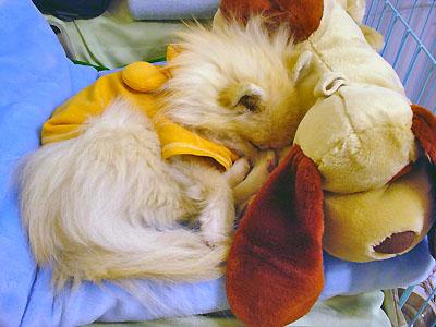 親友バロンと眠る エルモ