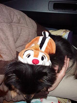 マミィのお膝で眠る クレア