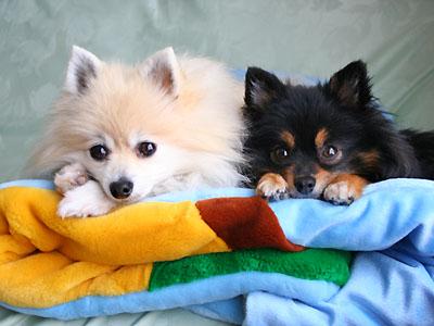 2匹仲良く 寝袋の上へ
