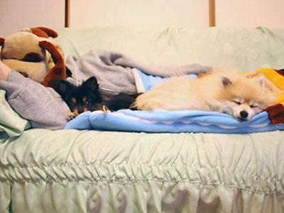 風邪で寝込むマミィに付き添う エル&クレ
