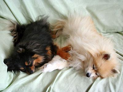 左右対称で寝る エル&クレ
