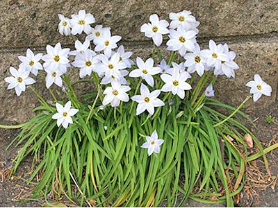 春のお花 ④