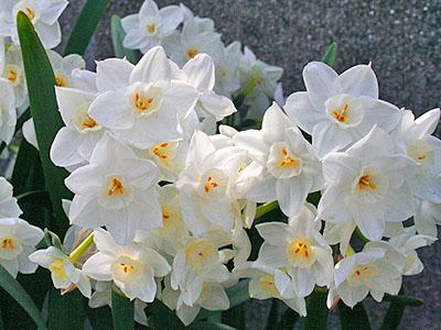 春のお花 ⑤