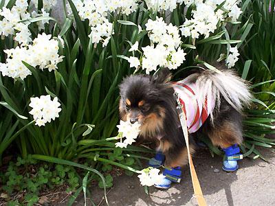 お花に興味津々の クレア