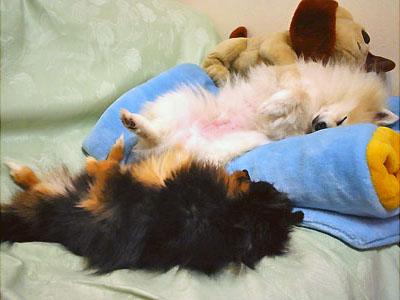 疲れて爆睡中の エル&クレ