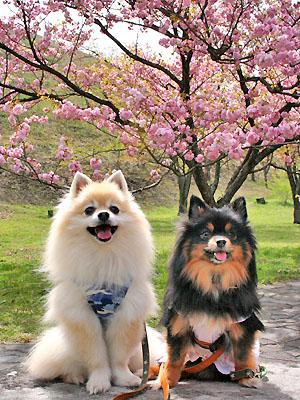 桜と 記念撮影