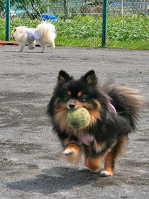 クレア ボール遊び ①