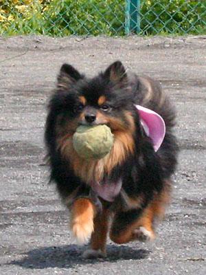 クレア ボール遊び ②