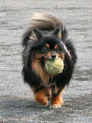 クレア ボール遊び ③