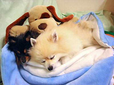 寝袋でおネンネ ①