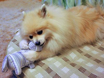 エルモ 犬のぬいぐるみで遊ぶ ②