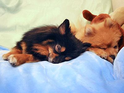 寝袋が大好き クレア&クリス
