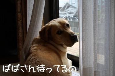 IMG_1079.jpg
