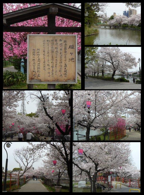 桃ヶ池-2