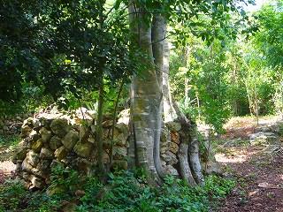pueblo maya 4