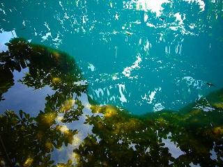cenote azul 5