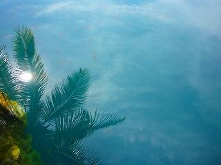 cenote azul 8