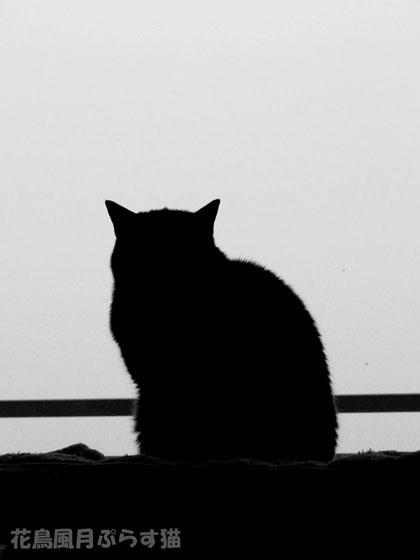 すばらしき猫背