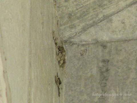 川のツバメの巣