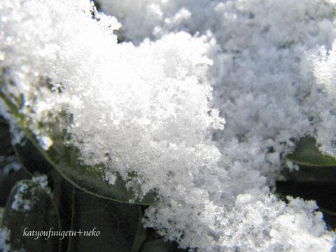 自然のカキ氷2