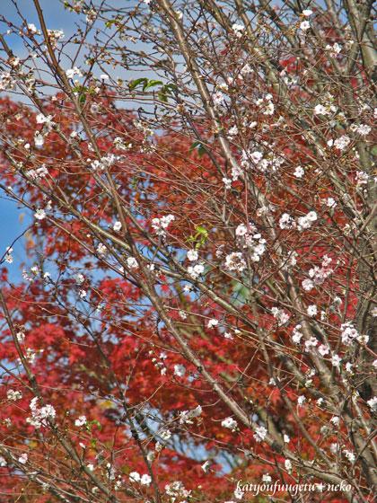 子福桜と紅葉