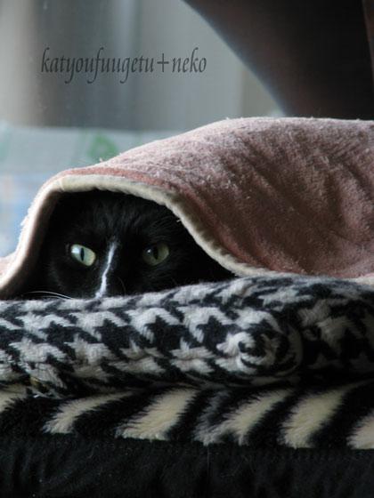 寒いですね.