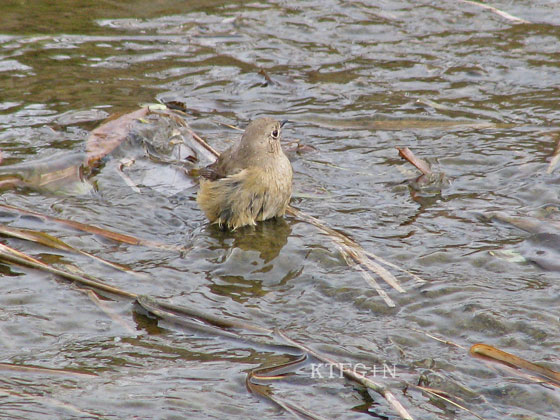 ジョウ子水浴び4
