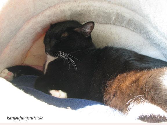 猫ベッドで