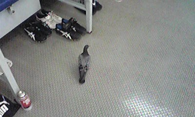 ロッカールームの来訪者