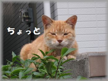 IMG_5294.jpg