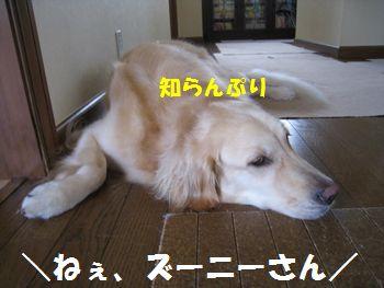 IMG_5537.jpg