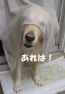 IMG_5709.jpg