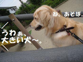 IMG_6110.jpg