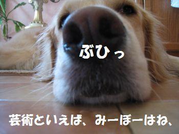 IMG_6587.jpg