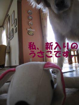 IMG_6638.jpg