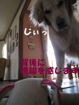 IMG_6639.jpg